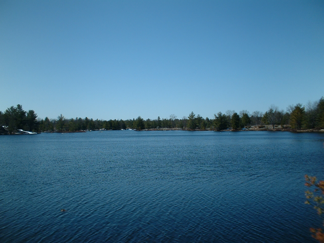 Doe Lake Gravenhurst Muskoka Land For Sale Pond Behind Property