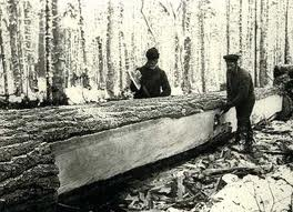 The History of Logging in Muskoka